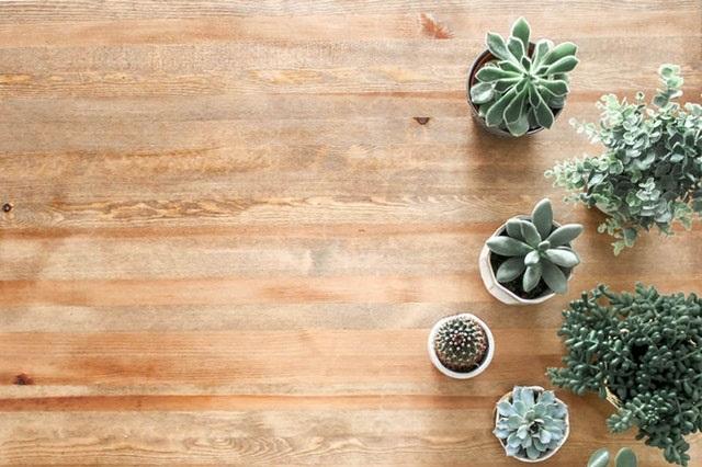 Podłoga z paneli i rośliny